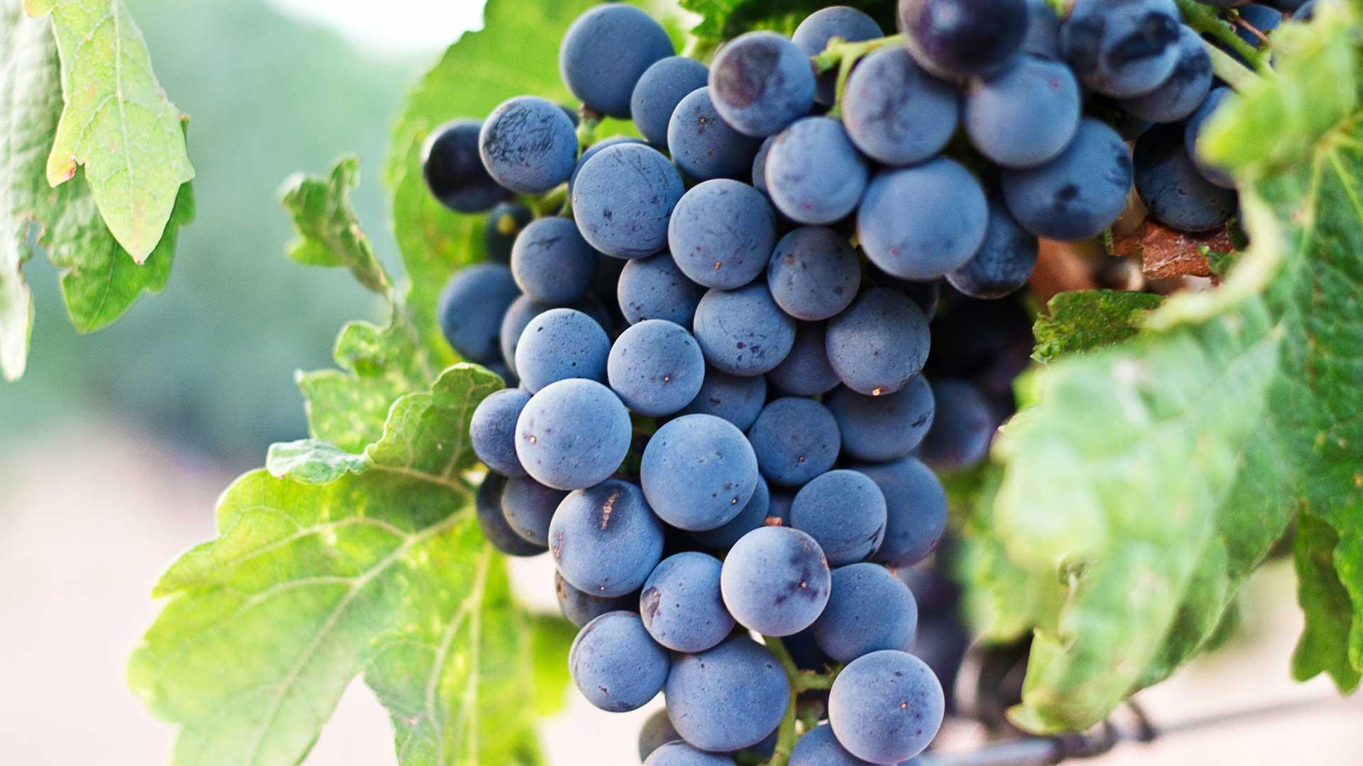 Webdesign für Weingüter